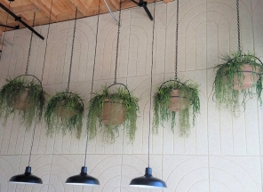 Hanging-Succulents