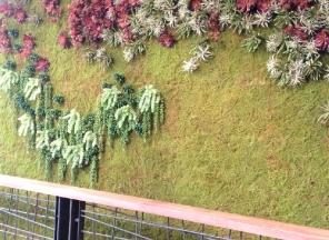 Moss/Succulent Wall