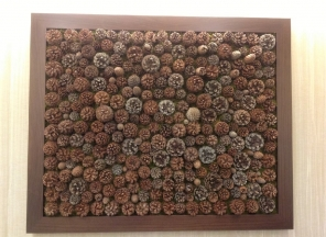 Pine Cone Wall