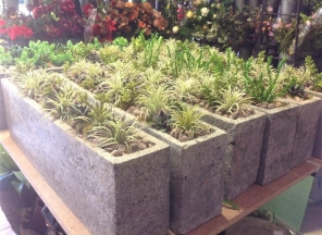 Succulents in Cement