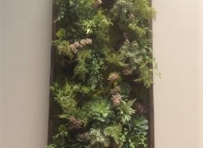 Succulent/Moss Wall