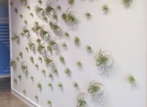 Succulent-Wall-Art