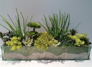 Succulents-in-Glass