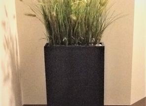 Grass in Zinc