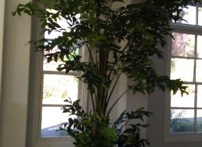 10-Fishtail-Palm-Tree-in-Tin