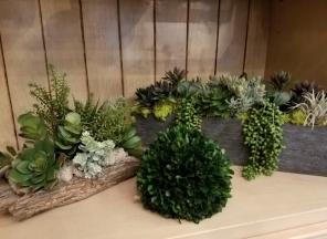 1_Succulent-Array