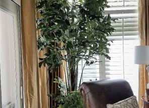 10' Fishtail Palm Tree