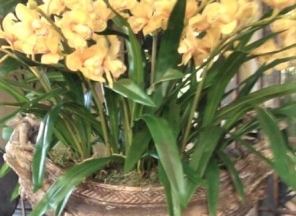 Gold Orchids in Urn