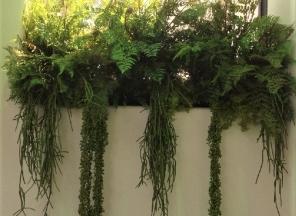 Ferns/Succulents Window Box