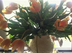 Yellow Tulips in Italian Pitcher
