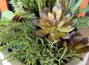Succulent-Array