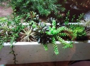 Succulents-in-Trough